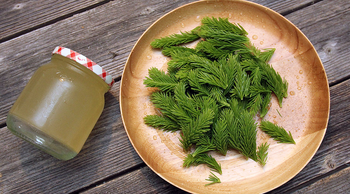 A picture of spruce tips jelly