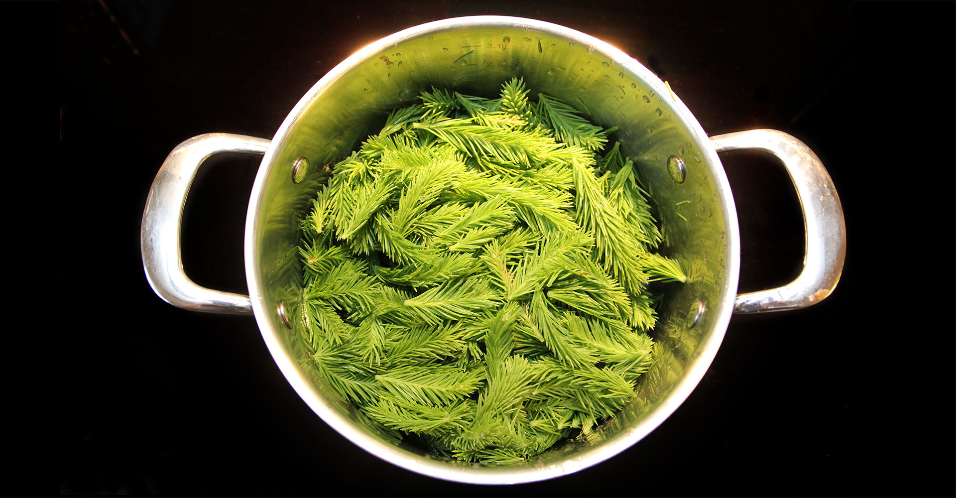 A picture of a kettle of spruce tips on a black background